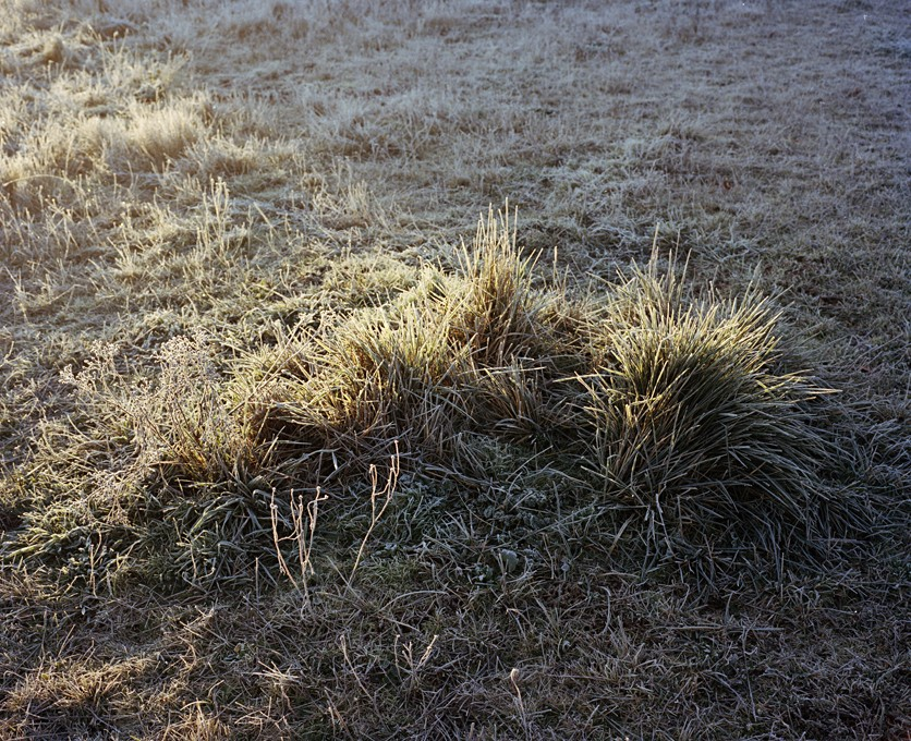 http://www.jakenussbaum.com/files/gimgs/th-42_Grass Edit copy.jpg